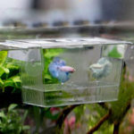 Original Fish Aquarium Accessoriess Fish breed box Incubator Breeder Rearing Trap Box Protect Fish