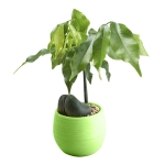 5 PCS Mini Cute Round Home Garden Office Decor Plastic Plant Flower Pots, Size: 7x7cm(Green)