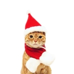 Cat Dog Christmas Hat Around Christmas Clothes Accessories, Size:M