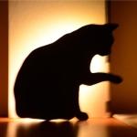 LED Light Control Sound Control Night Light Silhouette Light Shadow Light Cat Wall Light Black battery(Licking cat)