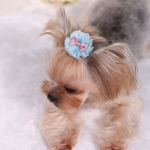 2 PCS Pet Hair Accessories Dog Headdress Lace Bow Hair Clip(Blue)