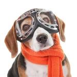 Creative Pet Sunglasses Big Frame Goggles Dog Harley Glasses(Transparent)
