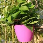 Self-Watering Planter Grow Plants Lazy Flower Pots Wall-hanging Round Resin Plastic Flower Pots, Size: 13×8.5x13cm(Purple)