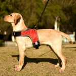 K-Shaped Luminous LED Harness for Pet Dogs without Rope, Size:M(Wine Red Without Light)