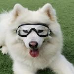 Pet Goggles Dog Transparent Glasses Waterproof Windproof Snowproof Dog Glasses(Transparent)